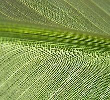 leaf VII by Floralynne