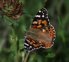 Butterfly Takes Healing by Dave Godden