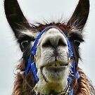 Dennis The Llama by Susie Peek