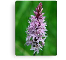 Common Orchid in Kent Canvas Print