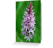 Common Orchid in Kent Greeting Card
