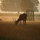 Deer at Dawn by Dave Godden