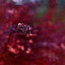 Farewell to autumn by Patrycja Makowska