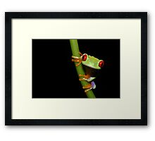 Red eyed tree frog on stalk Framed Print