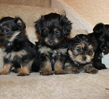 Puppy Love by TwinPowerTammy