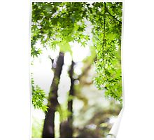 Maple tree 01 Poster