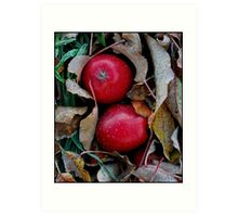 Frosty Apples Art Print