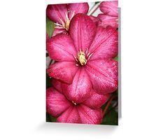 Vibrant Blossom Greeting Card