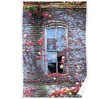 broken window, fall colors Poster
