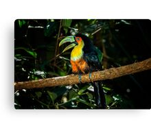Toucan No. 3 of Iguazu Canvas Print