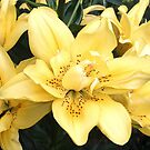 Cheerful Lilies by Sviatlana