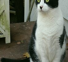 A Feline Portrait by Monica Engeler