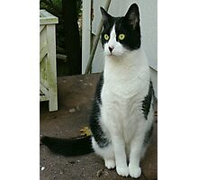 A Feline Portrait Photographic Print