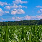 Bavaria in Green & Blue by socalmark