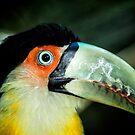 Toucan No. 4 of Iguazu by photograham