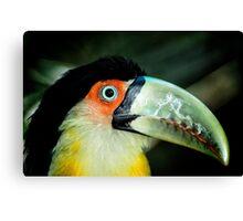 Toucan No. 4 of Iguazu Canvas Print