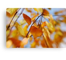 Lensbaby of fall leaves Canvas Print