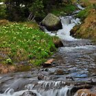 Alpine stream by John Anderson