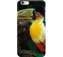 Toucan No. 5 of Iguazu iPhone Case/Skin