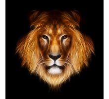 artistic lion portrait Photographic Print
