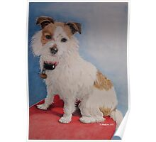 Peppa the rough coat terrier Poster