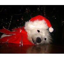 Awaiting Christmas Photographic Print