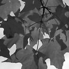 Red Maple in Black and White by Michelle BarlondSmith
