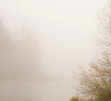 The Foggy Bog by Jenny Ryan