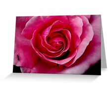 Pink Rose & Ant Greeting Card