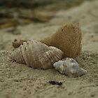seashells by Jodie Doyle