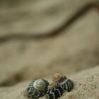 trio of shells by Jodie Doyle
