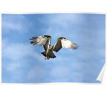 Flight of the Fishing Hawk Poster