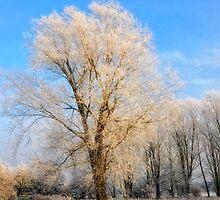Winter Tree by Karen  Betts
