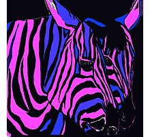 Midnight Zebra Abstract Photographic Print