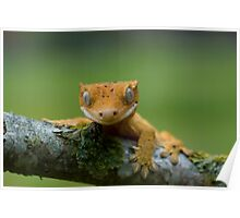 Young crested gecko Poster