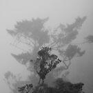 Misty Bosavi by panvorax