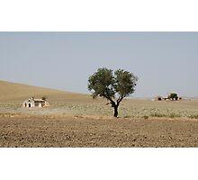 Puglia Landscape with Tree  Photographic Print