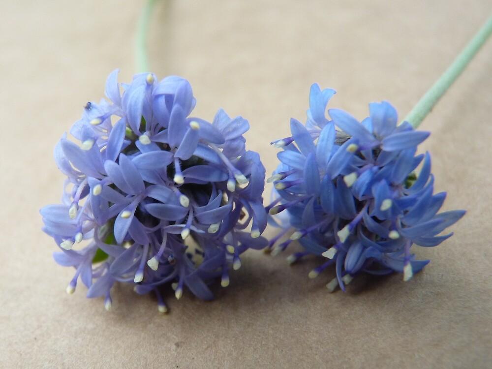Blue Blooms by Meg Hart
