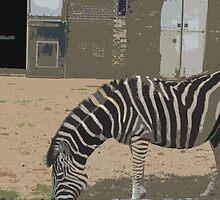 Zoobra by Hushabye Lifestyles