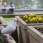 Suspicious Seagull by Luke Hogan