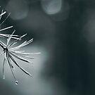 Pine by Purplecactus