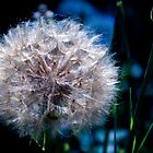 Flossy by reflexio