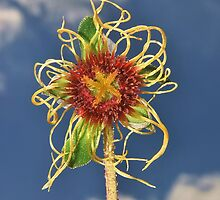 Dreadlock flower by relayer51