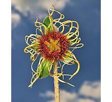 Dreadlock flower Photographic Print