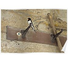 House Martin Poster
