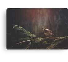 Chickadee in the Redwoods Canvas Print