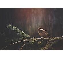 Chickadee in the Redwoods Photographic Print