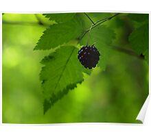 Oregon Wild Blackberry Poster