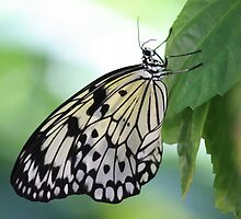 Just hang on there for a little longer, friend! by Indrani Ghose