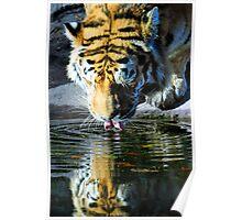 BIG CAT Poster
